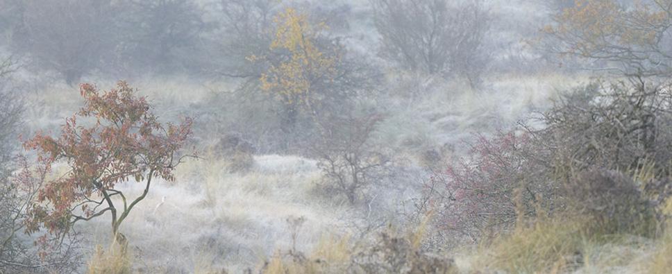 Verbeelding, Winter is coming, eric Bergmeester Photography